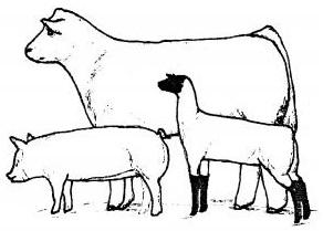 beef sheep swine